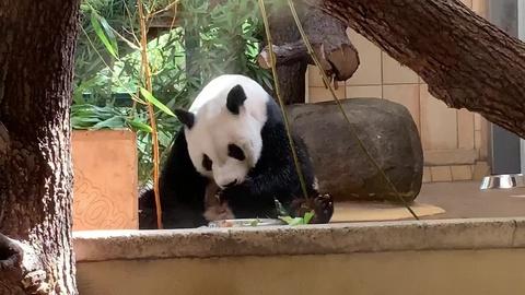 Katy Tube Zoo